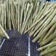Sugar cane sticks for making juice