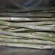 Sugar cane exporter