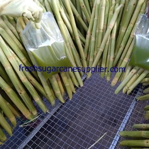 Fresh sugarcane supplier