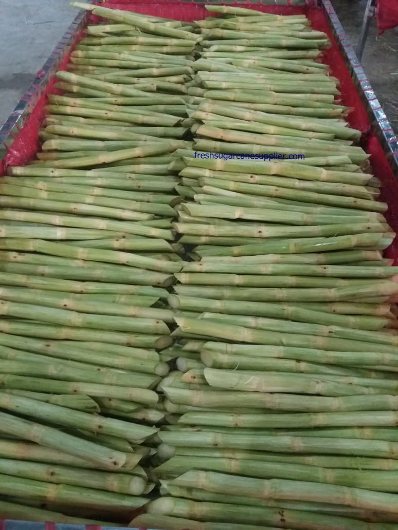 Sugarcane for making juice