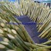 Sugar cane manufacturer