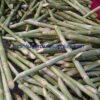 Fresh sugar cane stalks
