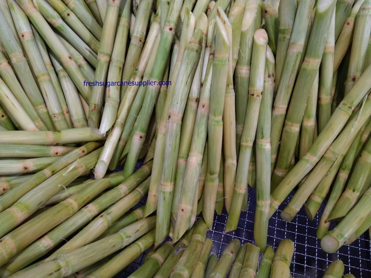 fresh sugarcane exporter